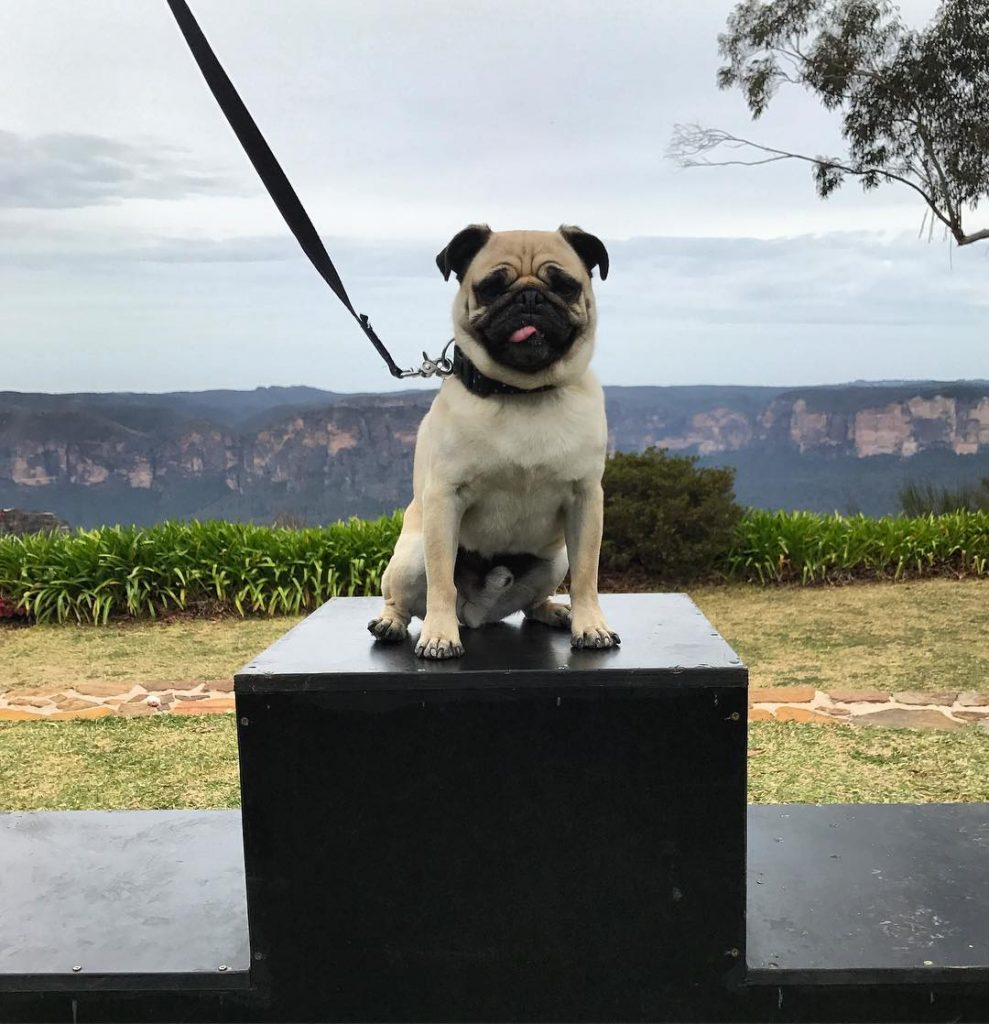 Top of the podium for boscopug He won the cutesthellip