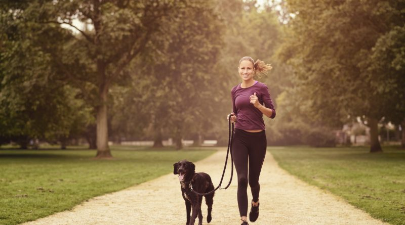 The Ultimate Training Partner – Your Dog!